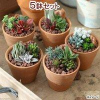 私のオアシス 多肉3種のシンプルテラコッタ寄せ植え(5鉢) 説明書付き