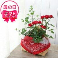 ●ギフト●ミニバラとユーカリ(花色品種おまかせ) ペイズリーバスケットセット(1個)