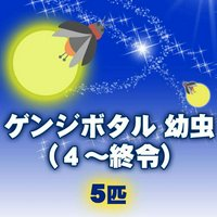ゲンジボタル 幼虫(4~終令)(5匹)