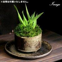 苔盆栽・益子焼