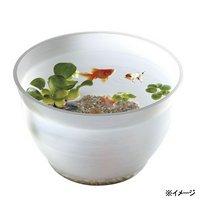 スドー 金魚の小鉢 しらゆき(白雪) 金魚鉢