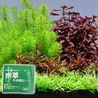 おまかせ水上葉 レイアウトセット 20cm水槽用 4種(無農薬)(水草説明書付)+水草その前に1g