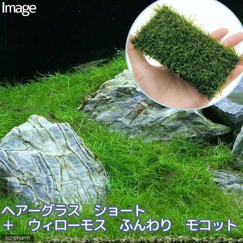 (水草)ヘアーグラス ショート+ウィローモス ふんわり モコット 熱帯魚