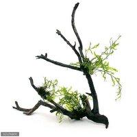 巻きたて ボルビティス ヒュディロティ 枝状流木 Lサイズ(約25cm)(無農薬)(1本)