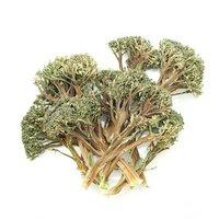 国産 かじってたのしい 蕾付き茎ブロッコリースティック 100g 小動物用のおやつ 無添加 無着色