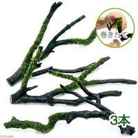 巻きたて ウィローモス 枝状流木 Mサイズ(約20cm~)(無農薬)(3本)