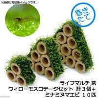(水草)巻きたて ライフマルチ(茶) ウィローモスコテージセット(無農薬)(計3個)+ミナミヌマエビ(10匹)