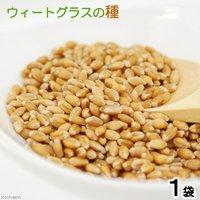 ウィートグラスの種(1袋)小麦若葉 生牧草 栽培 家庭菜園 種子