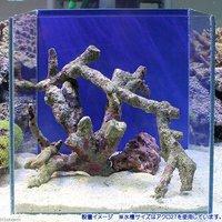 ライブロック 枝状 25~30cm水槽レイアウトセット(1セット)