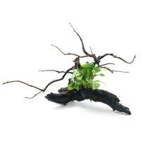 自在流木 アヌビアスナナ ゴールデン付 Sサイズ(1本)(約15cm)