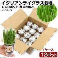 ケース売り 種まき済み イタリアンライグラス栽培 ECOポット(12ポット) 北海道冬季発送不可