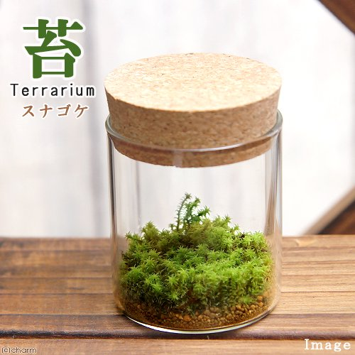 (観葉植物)苔Terrarium スナゴケ コルクボトル ミニ 説明書付