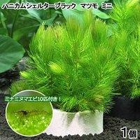 (水草)ハニカムシェルターマツモ ミニ(無農薬)(1個)+ミナミヌマエビ(10匹)
