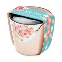 盆彩栽培セット 桜